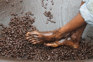 A young boy at a cocoa plantation in St Lucia using his bare feet in a dance-like motion to crush cocoa beans into a pulp in a traditional method of producing chocolate.