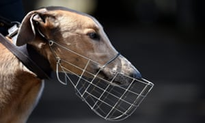 Greyhound doping