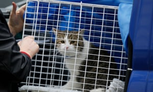 Larry thecat arrives in Downing Street in February 2011