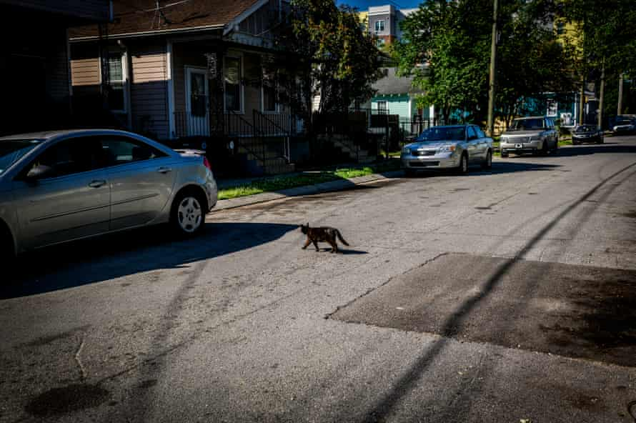 A cat hides crosses the street in the Leonidas Neighborhood of New Orleans, La., on Saturday, April 27, 2019.