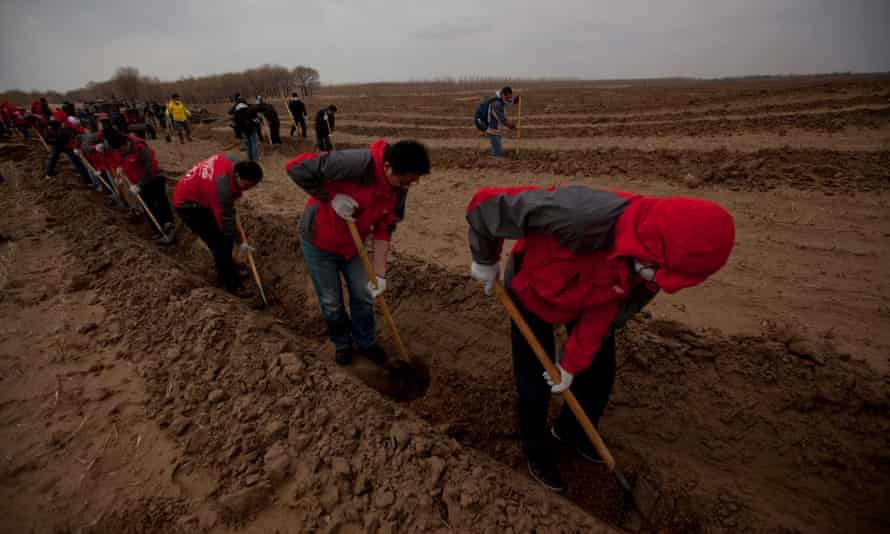 Volunteers of the Shanghai Roots and Shoots NGO dig holes to plant tree saplings in Kunlun Qi, in the Inner Mongolia Autonomous Region of China.
