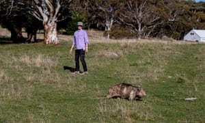Elena Guarracino is the Director of The Snowy River Alliance and Wildlife Rescue volunteer with LAOKO. She walks for kilometers each day tracking wombats that need mange treatment.
