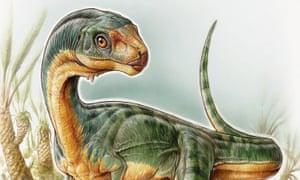 Chilesaurus diegosuarez, from the Late Jurassic period.