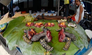 Yellow-footed tortoise meat on sale Belén market, Iquitos, Peru