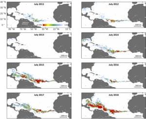 Sargassum belt scattered graphically