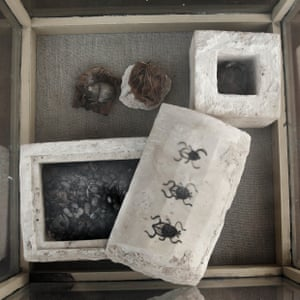 Mummified scarabs on display in a glass case found in a newly discovered tomb, at an ancient necropolis near Egypt's famed pyramids in Saqqara, Giza, Egypt.