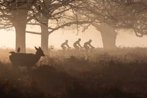 Photographer of the Year highly commended: Observer by Agata Boguszewska in Richmond Park, London, UK Three cyclists are watched by a young deer in Richmond Park