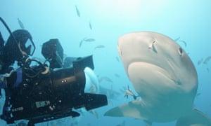 Sharkwater: Extinction.