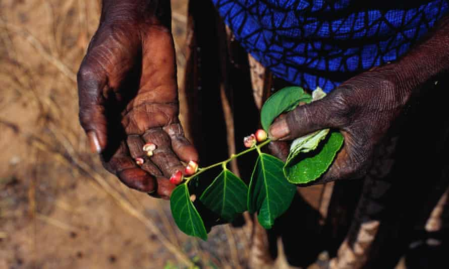 A woman shows edible red berries in Arnhem Land