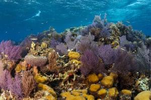 A coral reef at Banco Chinchorro