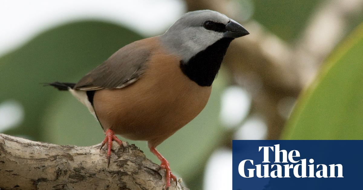 Adani: 2,000 hectares of black-throated finch habitat ...