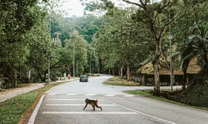 A long-tailed macaque crosses the road in Kuala Lumpur.