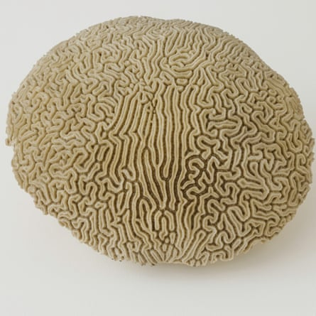 Dorothy Cross's brain coral.