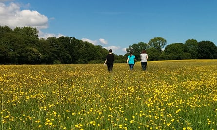 Mellow yellow: let your mind roam free in Yorkshire