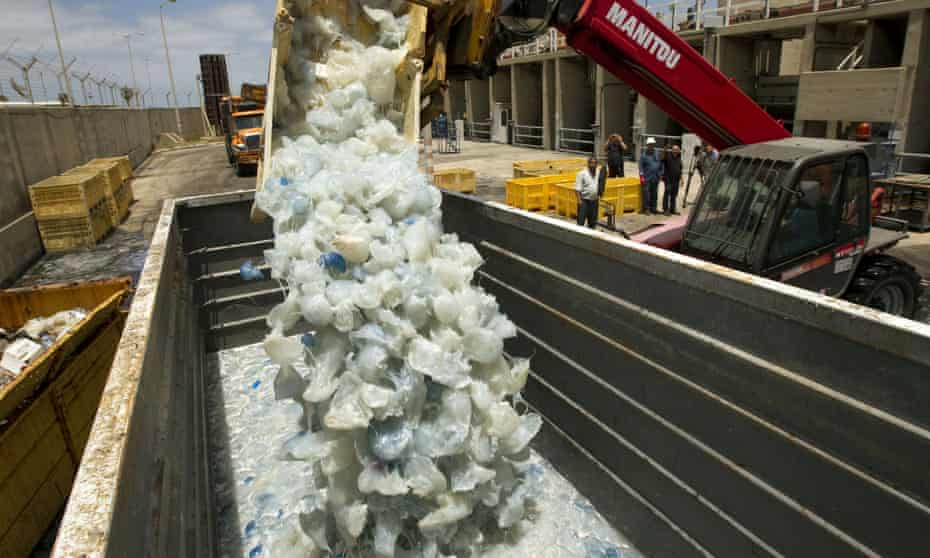 Jellyfish cleared from a power station in Hadera, a coastal city north of Tel Aviv, after they blocked the water supply to the plant.