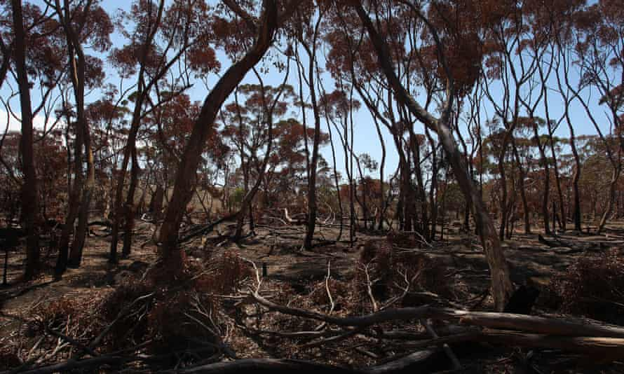 The most severely affected species lost at least 30% of their habitat to the fires.