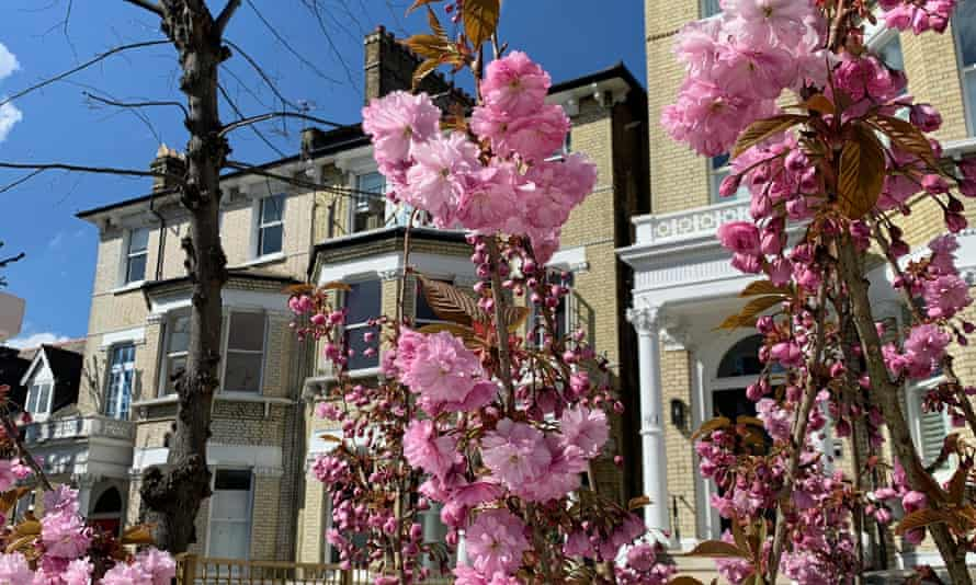 Blossom in south London photographed by a participant named Hannah
