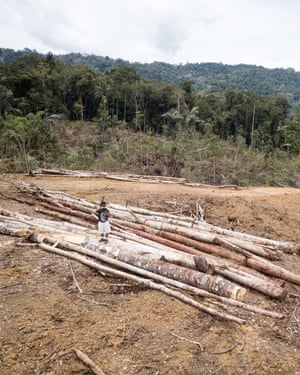 Trees cut for planned hydropower plant. Deforestation is happening in the highest density forest of Tapanuli orangutans left.
