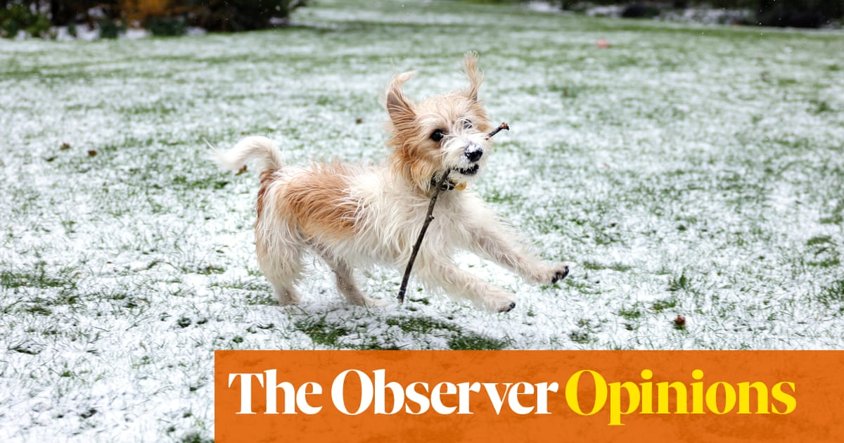 Vanity, thy name is Dilyn – yet still we lap up the PM's cheery brand of puppy propaganda | Catherine Bennett