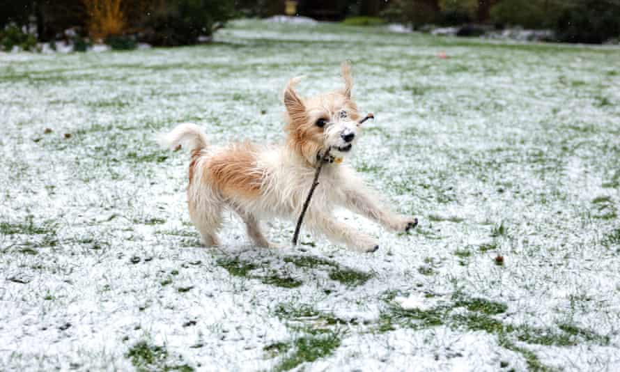 Boris Johnson's dog Dilyn was photographed playing in the snow by one of Downing Street's team of official photographers.