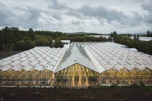 The tomato greenhouse of Friðheimar, in Reykholt.