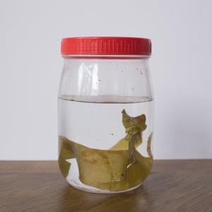 Kombu dashi (kelp stock)