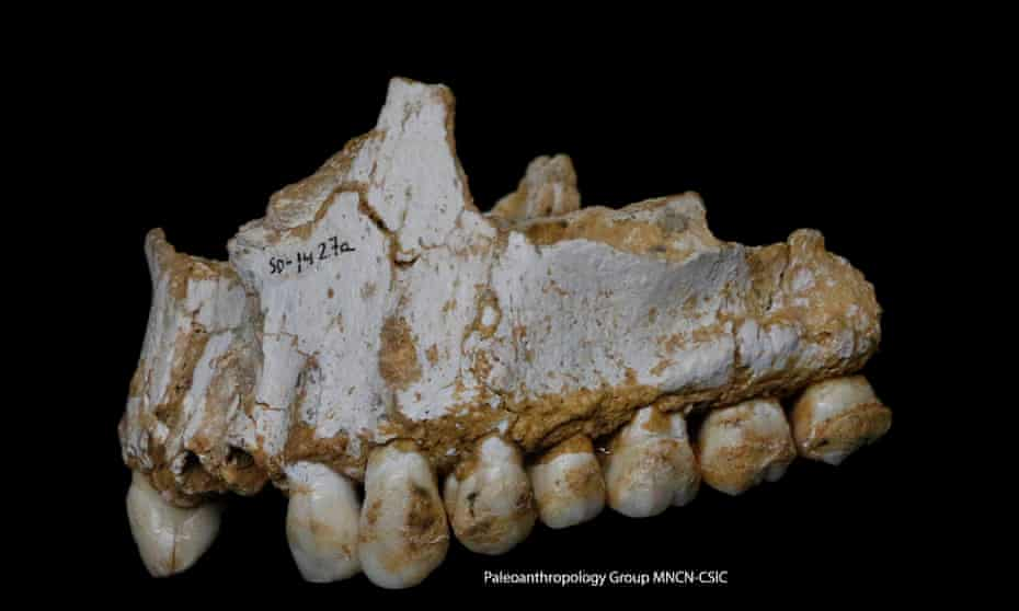 This Neanderthal individual was eating poplar, a source of aspirin, and had also consumed moulded vegetation including penicillium fungus, source of a natural antibiotic.