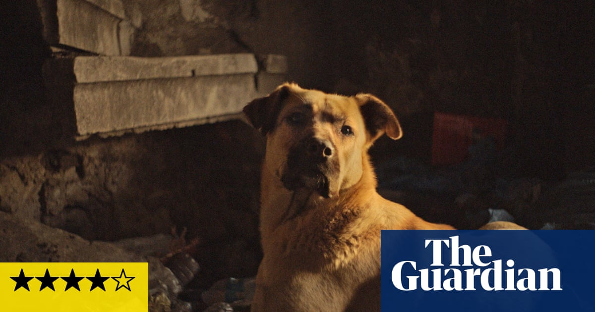 Stray review – exquisite dog's eye view of Istanbul