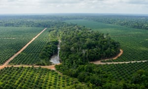 An oil palm plantation in Brazil