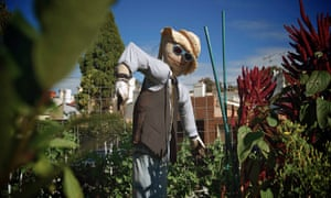 A scarecrow in the James Street Reserve Community Garden in Surry Hills, Sydney.
