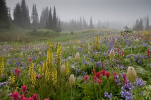 First place, Wildflower Landscapes