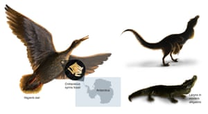 The fossil syrinx is from an extinct species related to ducks from the late Cretaceous of Antarctica. Within dinosaurs there was a transition from a vocal organ present in the larynx (seen in crocodiles) to one uniquely developed where the windpipe branches towards the lungs in birds.