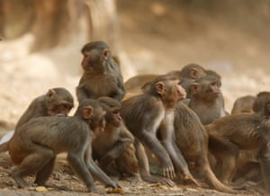 Monkeys wait for food at Kyauk Taw mountain in Rakhine state, Myanmar. The monkeys are suffering as visitor numbers are dwindling in the coronavirus pandemic