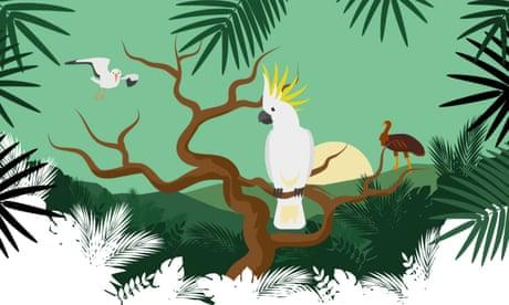 Australian bird of the year 2019: vote now for your favourite #BirdOfTheYear