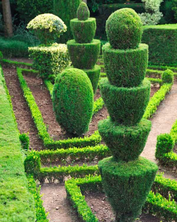 In vogue: before exoticism French and Italian-inspired topiary like this ornamental madeira was fashionable.
