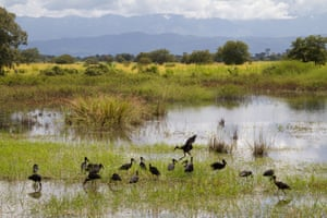 Birds, including open billed storks, are still regular visitors to the valley.
