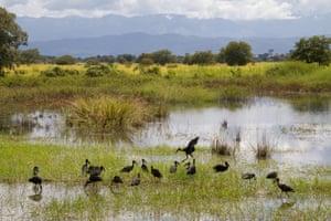 Kilombero valley, Tanzania