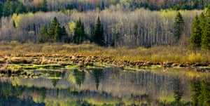 The boreal forest in Northern Ontario.