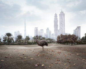 Abandoned by Richard Allenby-Pratt depicts an imaginary near future in which the world is no longer dependent on oil and – as a result – Dubai becomes deserted. After the wealthy have fled, zoo animals are free to roam around the incongruent environment. Abandoned is showing at the GetxoPhoto international image festival