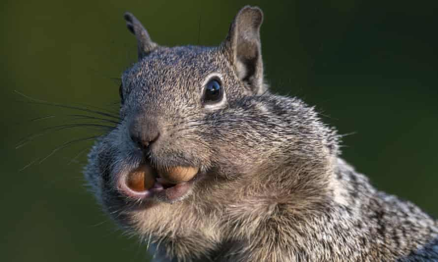 According to the research, some squirrels are more outgoing than others.