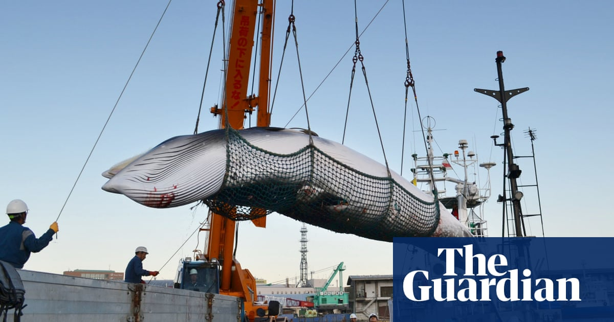 International Body Confirms It Our >> Japan Confirms It Will Quit Iwc To Resume Commercial Whaling