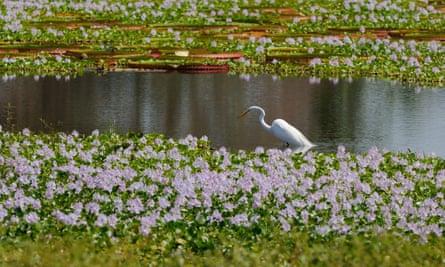 Na região há 4,7 mil espécies de plantas e animais selvagens.