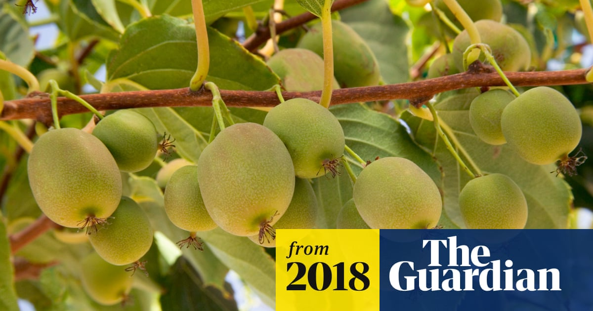 Kiwi crisis: New Zealand changes visa rules to save bumper crop of