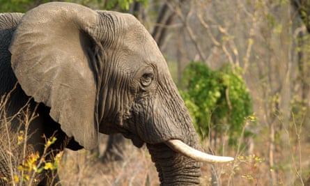 Elephant in Hwange National Park, Zimbabwe