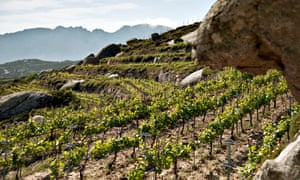 Heat and dust: vines growing on a rocky hillside in Tinos, Greece.