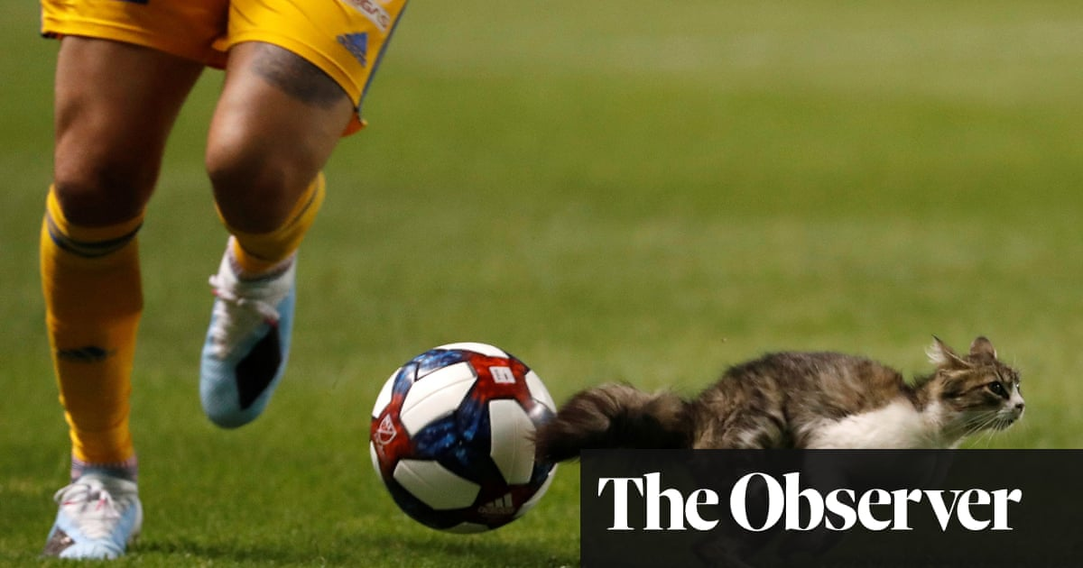 The alternative 2019 sports awards: quotes, gaffes and animal cameos
