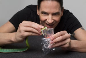 Lethal shot: Steve milking venom from a pope's pit viper.