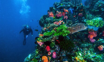 A coral reef in the Komodo National Park, Indonesia.
