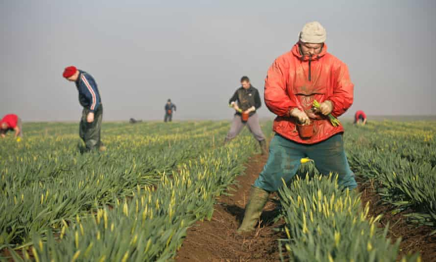 Migrant workers in a field