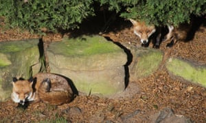 Killings were not the work of foxes, say vets.